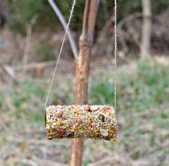 earth day crafts for kids bird feeder